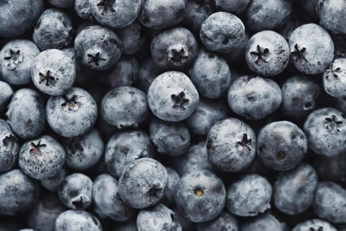 Close up of fresh blueberries.